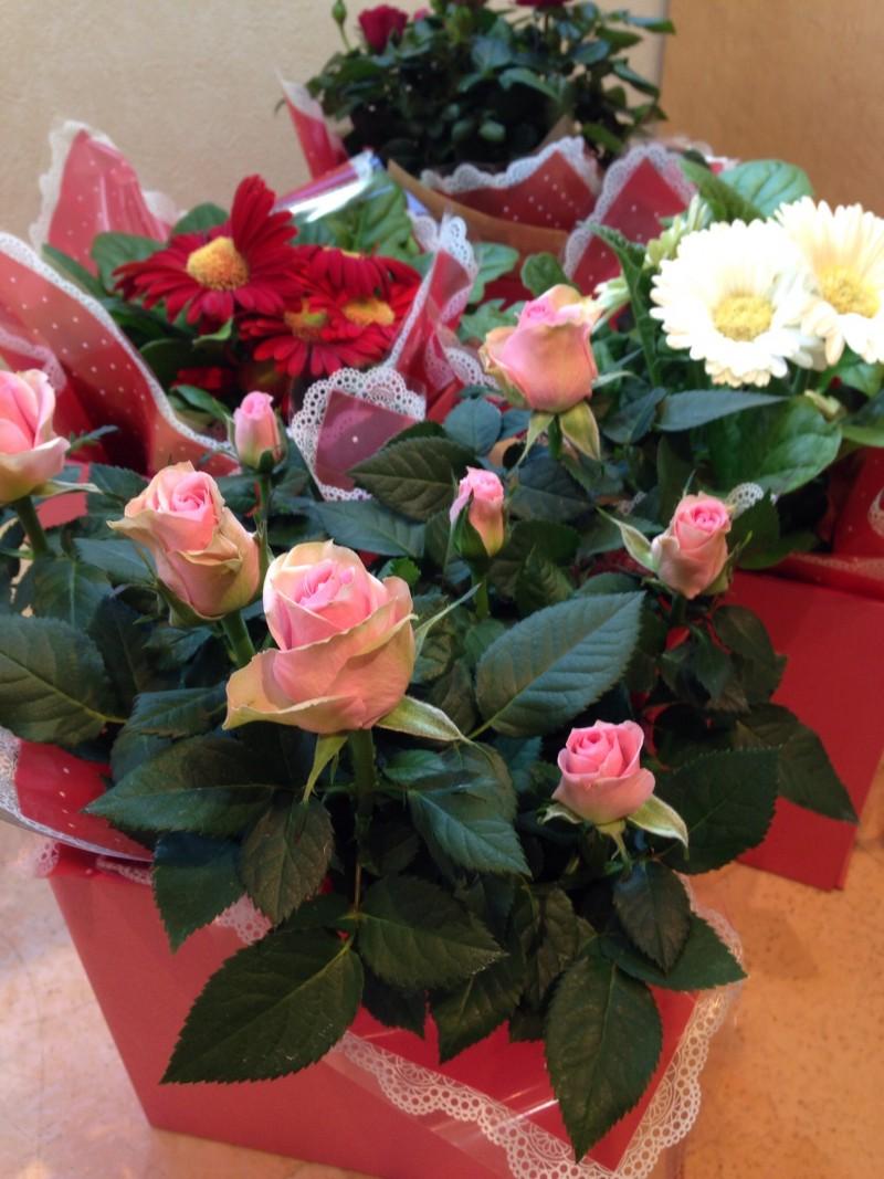寄せ植え花鉢